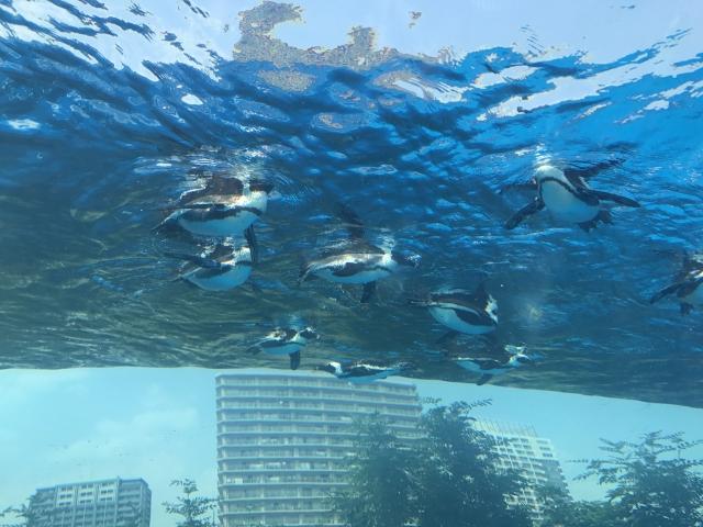 【レジャーの節約】サンシャイン水族館を割引で楽しみたい!クレジットカード特典などお得なチケットを入手する方法のまとめ