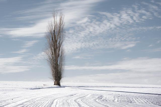 美しくも厳しい大自然!雪景色が印象的な映画。アクションから感動作までいろいろ。
