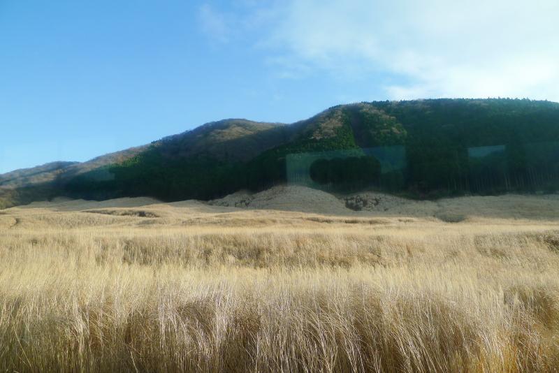 箱根仙石原のすすき野原、風に吹かれてなびくススキが美しい