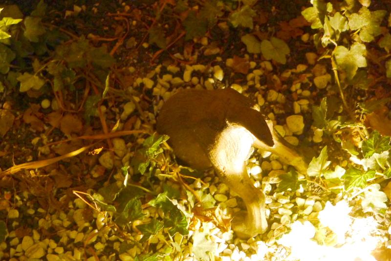 箱根仙石原温泉オーベルジュ漣のラウンジ脇の暖炉の近くに犬の置物が埋まっている
