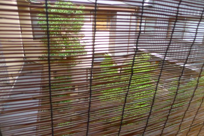 修善寺温泉_ねの湯対山荘_メゾネット式客室 お風呂場から見た景色(中庭)