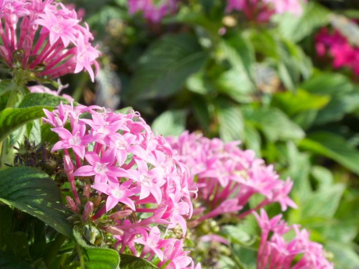 伊豆城ケ崎フラワーガーデンに咲く花