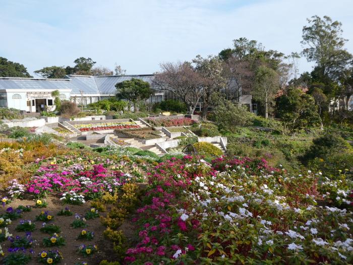 伊豆城ケ崎フラワーガーデンの階段状の花壇