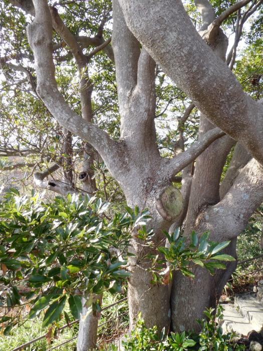 伊豆城ケ崎フラワーガーデンの支えあいの木