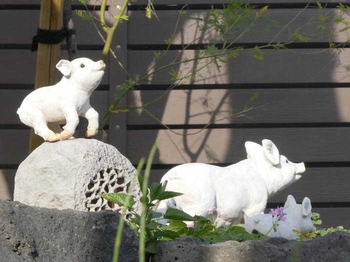 伊豆城ケ崎フラワーガーデンには動物たちがいっぱい